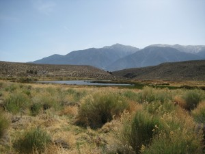 Overlooking the alkali ponds of Benton Hot Springs Ranch, with the Boundary Peak in the background
