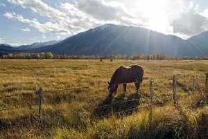 Reece Parker, Horse, Photo, 12 x 18