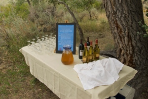 The wine and cheese display under the cottonwoods. Photo courtesy of Stephen Ingram