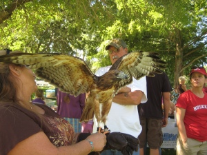 Karma the Red Tailed Hawk made a guest appearance with the Eastern Sierra Wildlife Care.