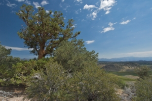 View from top of Crowley Hilltop Preserve. Photo by Stephen Ingram.