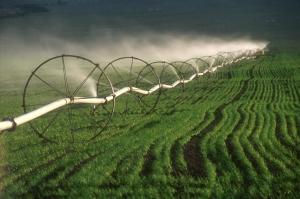 Alfalfa Farm