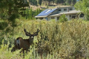 Our easements in the residential Swall Meadows community help protect the Mule Deer in their yearly migration. They also bring financial benefits to the residents. Photo courtesy of Stephen Ingram.