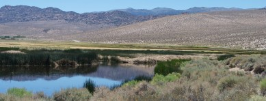 The Benton Hot Springs Ranch Conservation Easement features dozens of acres of prime bird habitat near its spring-fed ponds.