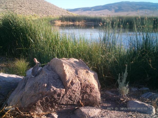All sorts of species enjoy rock climbing in the Eastern Sierra!