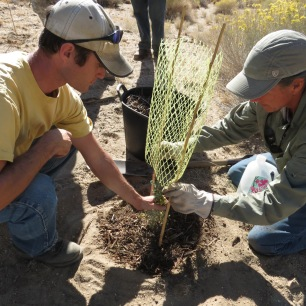 Last year we planted 90 bitterbrush shrubs with our volunteers - help us keep them growing strong in 2014!