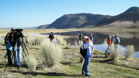 Black Lake provides important winter habitat to migratory waterfowl that travel along the Pacific flyway. In 2010, ESLT teamed up with Eastern Sierra Audubon to host a birdwatching field trip to the area; the organizations hope to host a similar outing again soon.