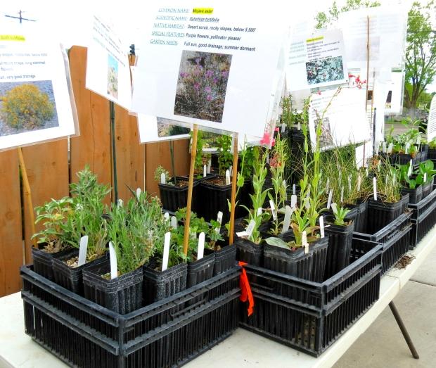 Gardenfest - CNPS