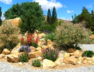 Margy Marshall's beautiful certified Native Pollinator Garden!