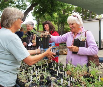 CNPS – Bristlecone Chapter President Katie Quinlan (left) with gardener Sydney Quinn.