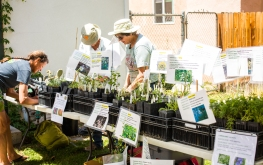 The array of native plants sold by California Native Plant Society – Bristlecone Chapter was a big draw for local gardeners.